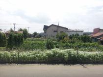 相内町149番 土地