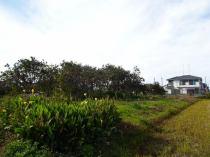 小松島市金磯町字一番町8の外観写真