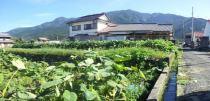 土居町小林 土地の外観写真