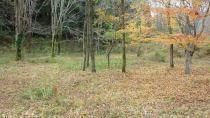 高森町上色見土地(西側)の外観写真